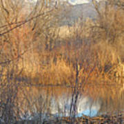 Beaver Dam At Sunset In Colorado            Poster