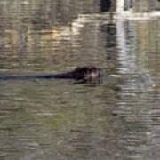 Beaver Glide Poster
