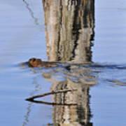 Beaver In Motion Poster