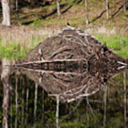 Beaver Lodge Reflection Poster