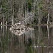 Beaver Lodge Reflections Poster