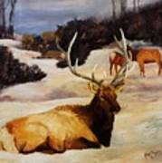 Bedded Down   Bull Elk In Snow Poster