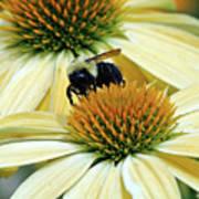 Bee Buzzer Poster