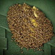Bee Cluster Poster