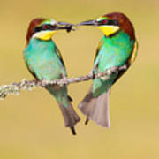 Bee-eater Valentine Heart Poster
