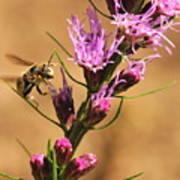 Bee In Flight Poster