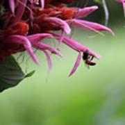 Bee In Kauai Poster