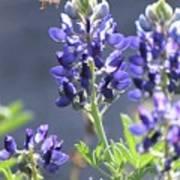 Bee In My 'bonnet Poster