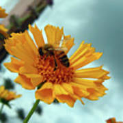 Bee Nice Poster