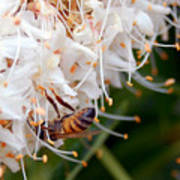 Bee On Flowers 1 Poster