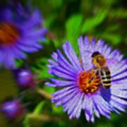 Bee On Lavender Flower Poster