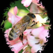 Bee On Pink Flower With Swirly Framing Poster