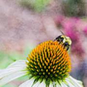 Bee On Yellow Coneflower Poster