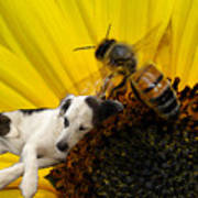 Bee With Dog Poster