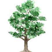 Beech Tree Minimalist Watercolor Painting Poster