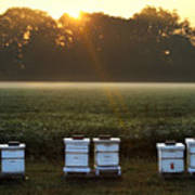 Beehives At Sunrise Poster