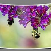 Bees On Butterfly Bush Framed Poster