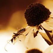 Beetle And Black Eyed Susan Poster