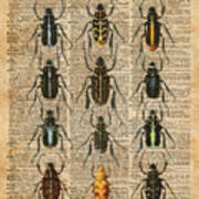 Beetles Bugs Zoology Illustration Vintage Dictionary Art Poster