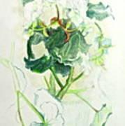 Begonia Ballet Poster