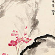 Begonia Flowers Poster