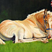 Belgian Horse Foal Poster