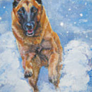 Belgian Malinois In Snow Poster