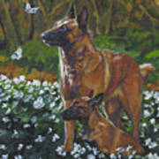 Belgian Malinois With Pup Poster