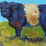 Belted Galloway Cow - The Blue Beltie Poster