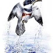 Belted Kingfisher Poster by Christopher Cox