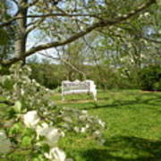 Bench In Spring Poster
