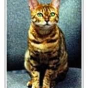 Bengal Cat Digital Oil Pastel Poster