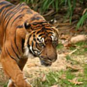 Bengal Tiger II Poster