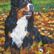 Bernese Mountain Dog Autumn Leaves Poster