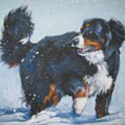 Bernese Mountain Dog In Drift Poster