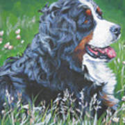 Bernese Mountain Dog In Wildflowers Poster
