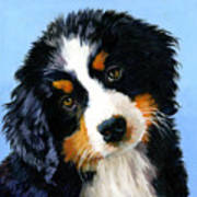 Bernese Mountain Puppy Poster