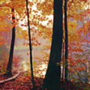 Bernharts Dam Fall 031 Poster