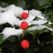 Berries In Snow Poster