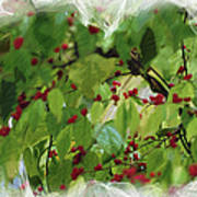 Berries And Leaves 51 Poster