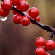 Berries With Water Droplets Poster