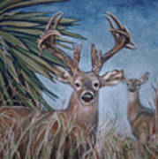 Berry Buck And Doe Poster