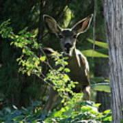 Beverly Hills Deer Poster