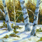 Big Birches In Winter Poster
