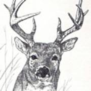 Big Buck Poster