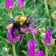 Big Bumblebee Poster