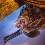 Big Eared Bat At Sunrise Poster