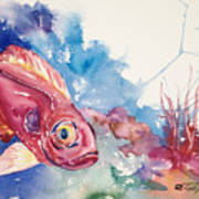 Big Eye Squirrelfish Poster