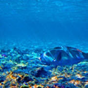 Big Fish. Underwater World. Poster