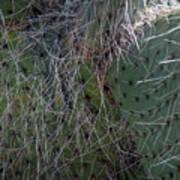 Big Fluffy Cactus Poster